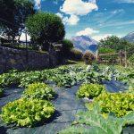E le insalate crescono  Avrei potuto fare la giardinierahellip