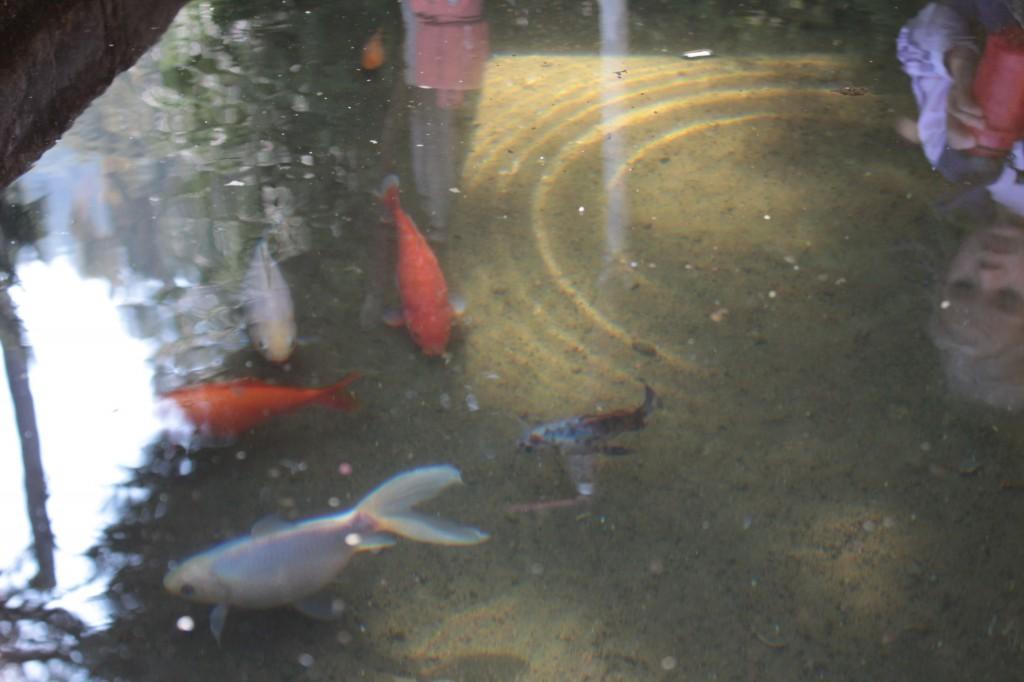 Ryby w fontannie
