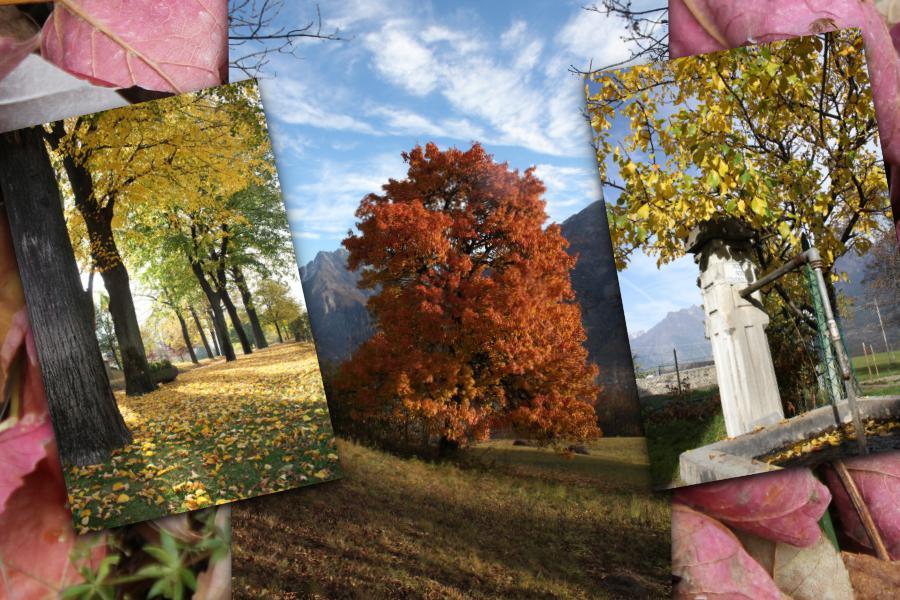 Kolory jesieni w Dolinie Aosty