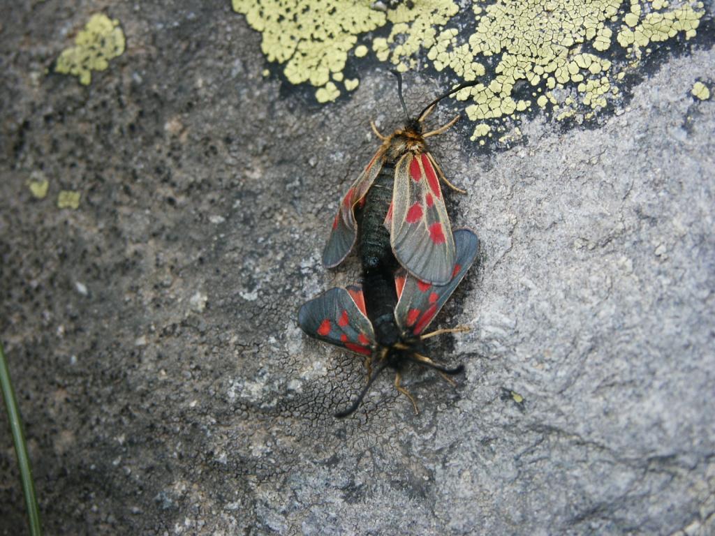 2 owady