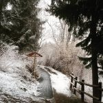 Si cerca la primavera e invece arriva la neve hellip
