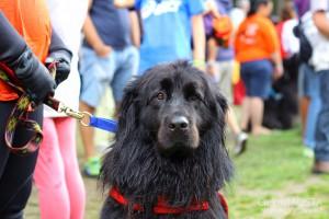 Pies rasy Terranowa nad jeziorem Lexert.