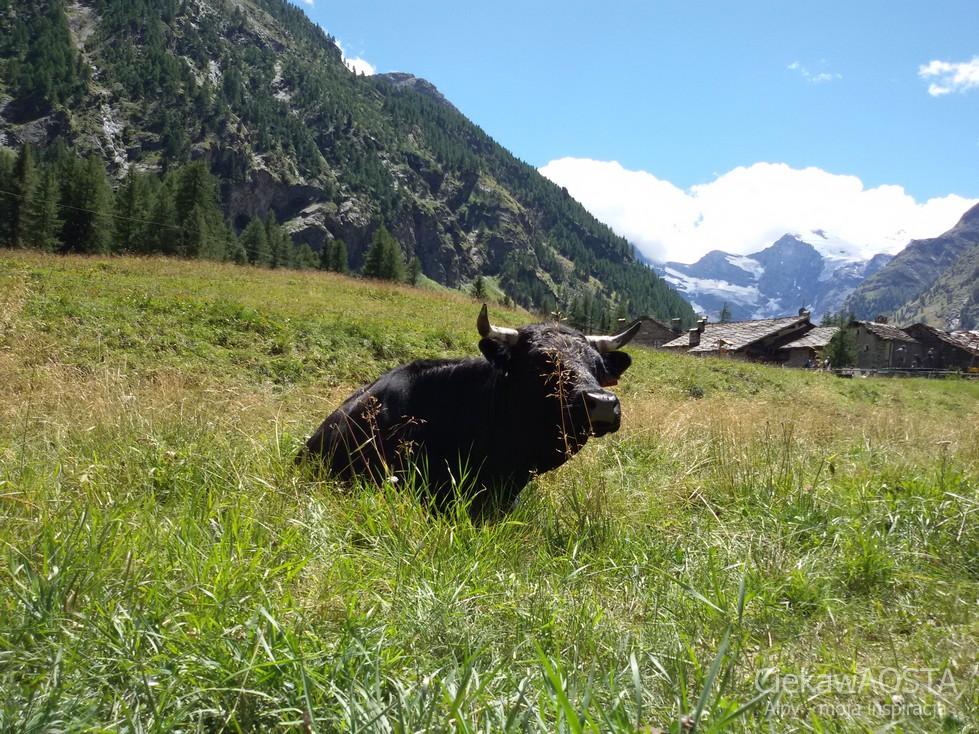 Pastwisko i sympatyczne krowy :-).