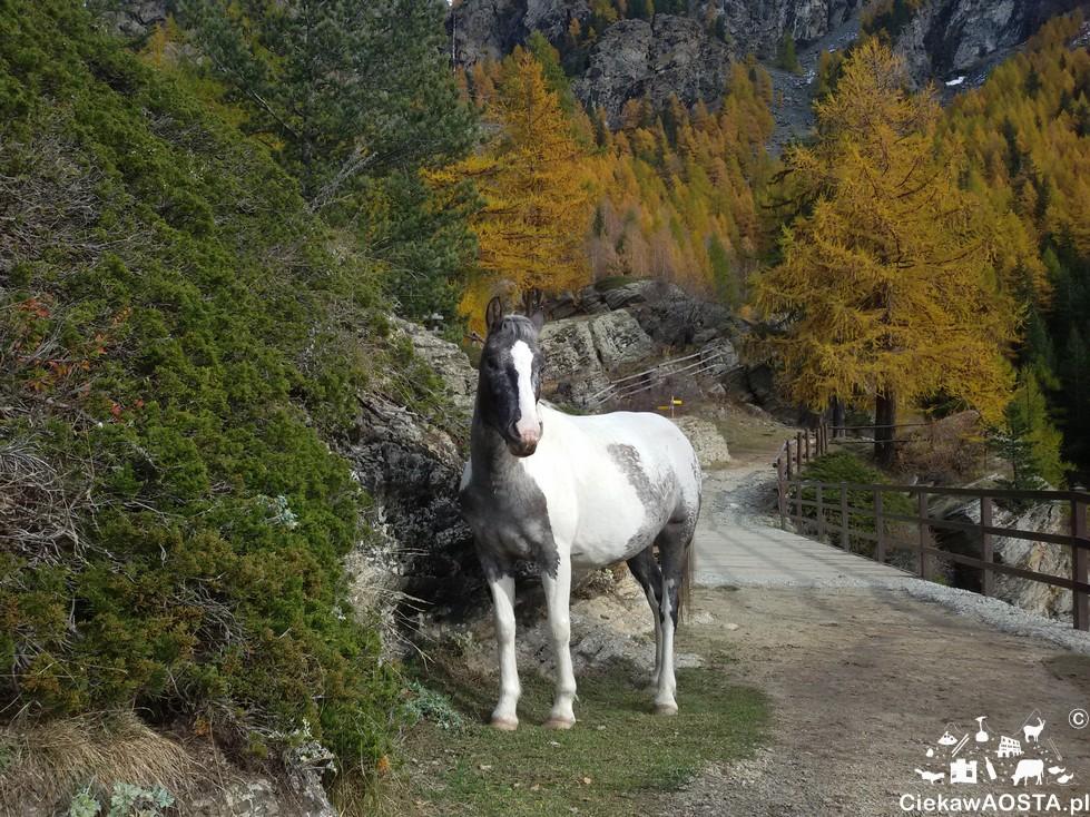 Przed ostatnim wodospadem spotymay również konie!