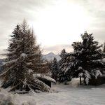 I colori del bosco in inverno sono bosco inverno2018 hiverhellip