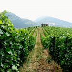 wloski porzdek winnice dolina aosta aymavilles aostavalley montagna mountains alpihellip