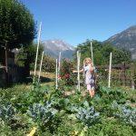 Czekajc na pomidory  Aspettando i pomodori nelle alpi alpshellip