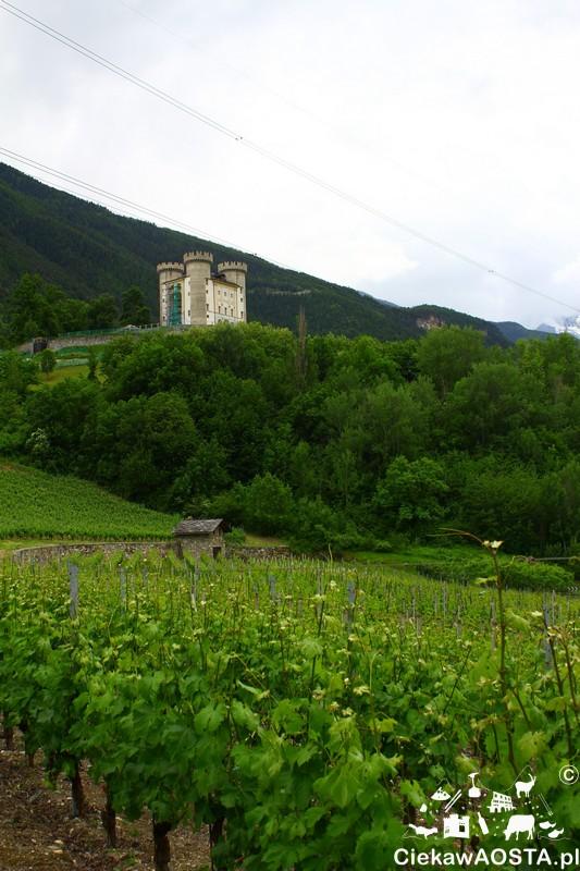 Widok na winorośle i zamek w Aymavilles zamieszkany przez nietoperze.
