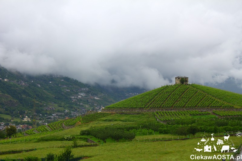 Widok na wzgórze Les Crêtes z siedziby producenta wina Cave des Onze Communes w Aymavilles.