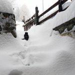 Oggi in Valle dAosta nevica  Il gatto  uscitohellip