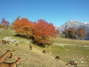 1 listopada w Valle d'Aosta, pogoda jak marzenie! W tle szczyt Grand Combin.