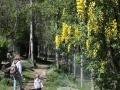 Ścieżka w Parku zwierzęcym