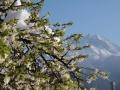 Wiosna w Alpach