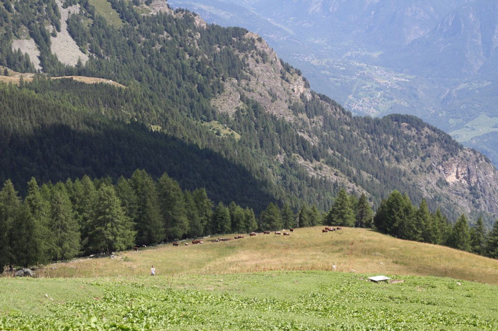 Pastwisko w Alpach w Dolinie Aosty, na którym latem wypasają się krowy mleczne. Na zdjęciu pastwisko na wysokości około 1900 m n.p.m.