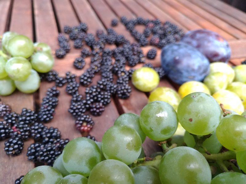 Owoce sezonowe we Włoszech