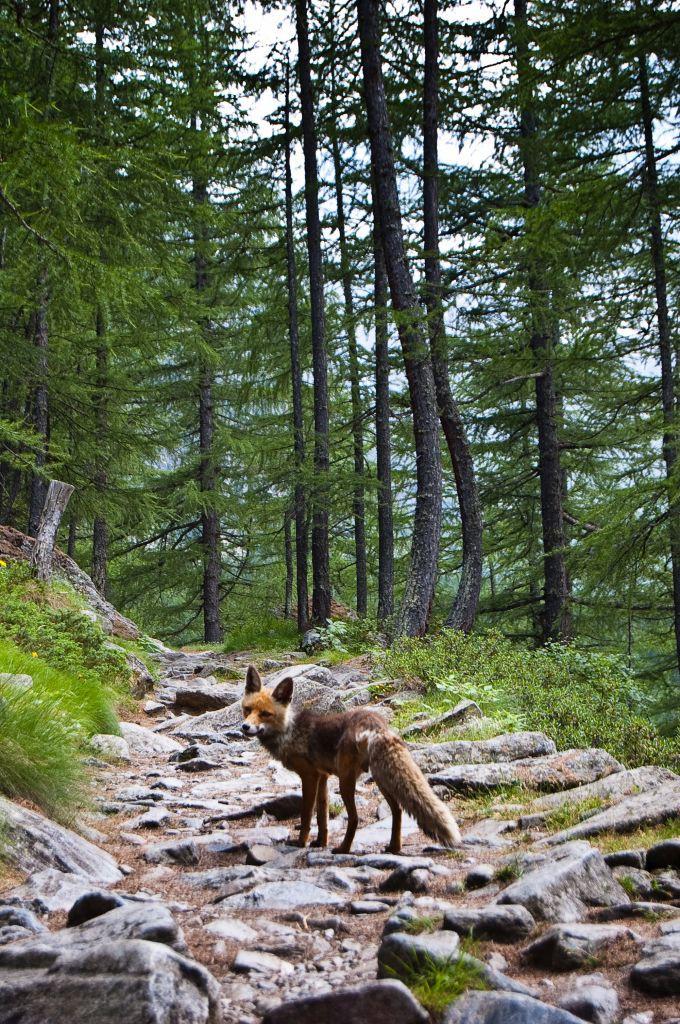 Szlak w Valnontey w Parku Narodowym Gran Paradiso. Źródło TU