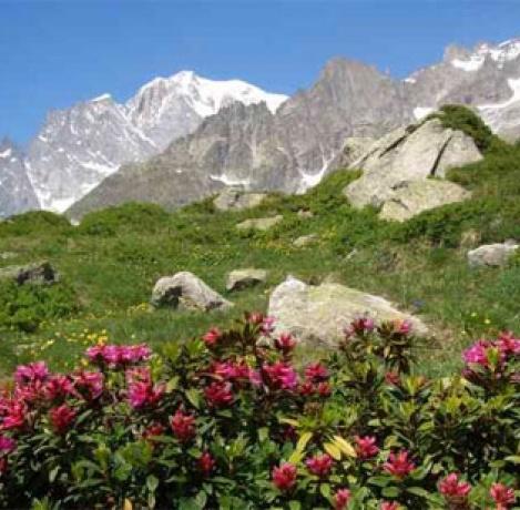 Ogród botaniczny Saussurea u stóp Mont Blanc